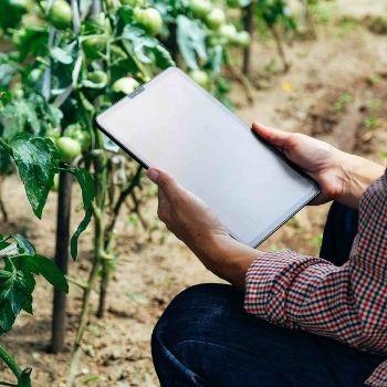 L'ondata di gelo e il monitoraggio delle colture, un servizio fondamentale per tutelarsi